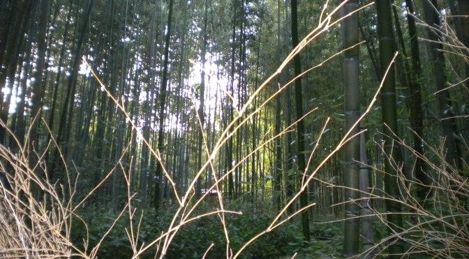 L'esperienza di Kyoto (Foresta dei Bambu) Arashiyama